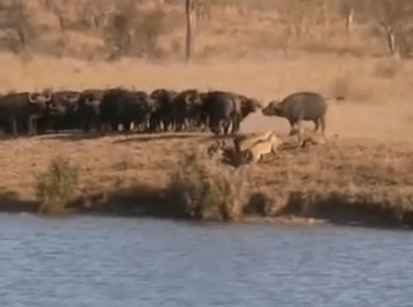 Battle at Kruger